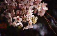 wiosna fota